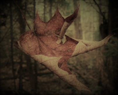 falling-leaves_1024